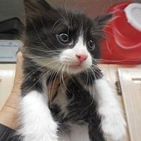Adopt A Pet :: Clarabelle - Morgan Hill, CA