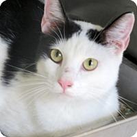 Adopt A Pet :: Mora - Carrollton, GA