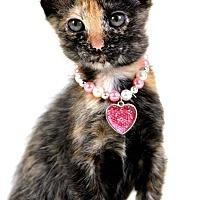 Adopt A Pet :: Xena - Jackson, MS