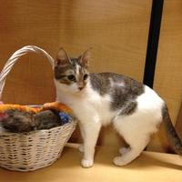 Adopt A Pet :: Tallia - Blackwood, NJ