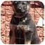 Photo 3 - German Shepherd Dog Puppy for adoption in Los Angeles, California - Caitlyn von Lancaster