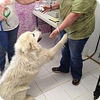Adopt A Pet :: Nono - Dandridge, TN