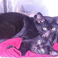 Adopt A Pet :: Nina - Maywood, NJ