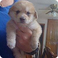 Adopt A Pet :: Micah - Russellville, AR