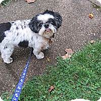 Adopt A Pet :: Franklin - Wilmington, DE