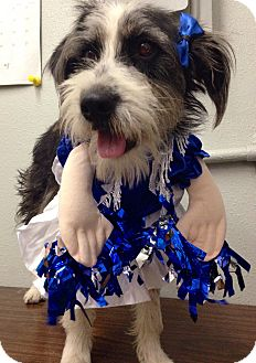 Terrier (Unknown Type, Small) Dog for adoption in South Gate, California - Oreo