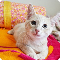 Adopt A Pet :: Marley - Xenia, OH