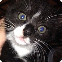 Adopt A Pet :: Tux - Long Beach, NY