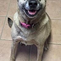 Adopt A Pet :: Aura - Holly Springs, NC