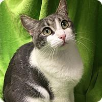 Adopt A Pet :: Joy - Foothill Ranch, CA