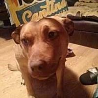 Adopt A Pet :: Paris - Koontz Lake, IN