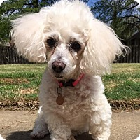 Adopt A Pet :: Gabby: Affectionate! (AL) - Spring City, TN