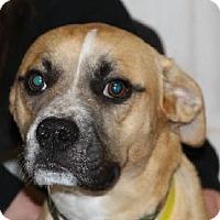 Adopt A Pet :: Jefferson - Avon, NY