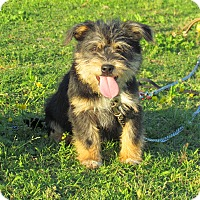 Adopt A Pet :: MARLEY - Bedminster, NJ