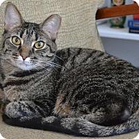 Adopt A Pet :: Clover - Cincinnati, OH