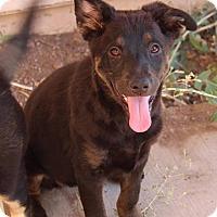 Adopt A Pet :: Cher - Phoenix, AZ