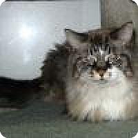 Adopt A Pet :: Anastasia - Powell, OH