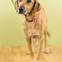 Adopt A Pet :: Hope - West Allis, WI