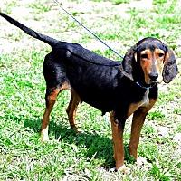 Adopt A Pet :: Oprah - Cleveland, OH