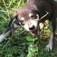 Adopt A Pet :: Cherub - Gainesville, FL