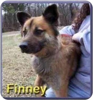 German Shepherd Dog Mix Dog for adoption in Aldie, Virginia - Finney