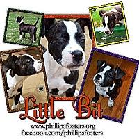 Adopt A Pet :: Little Bit - Colleyville, TX
