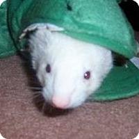 Adopt A Pet :: Clyde - Ville Platte, LA