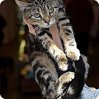 Adopt A Pet :: Jillian - Brooklyn, NY