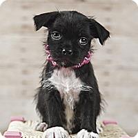 Adopt A Pet :: Maddie - Wytheville, VA