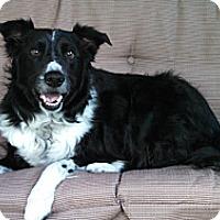 Adopt A Pet :: Jacob & Hershey - Denver, CO