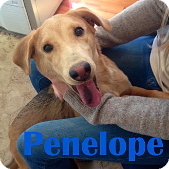 Border Collie/Shepherd (Unknown Type) Mix Dog for adoption in Orangeburg, South Carolina - Penelope