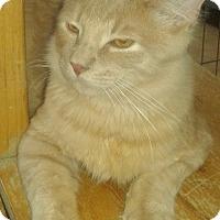 Adopt A Pet :: Romeo - Whittier, CA