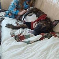 Adopt A Pet :: Bundles - Williston, VT