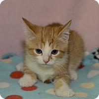 Adopt A Pet :: Saul - Medina, OH