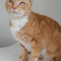 Adopt A Pet :: Goldie - Monroe, WI