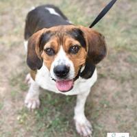 Adopt A Pet :: Kinley - Newburgh, IN