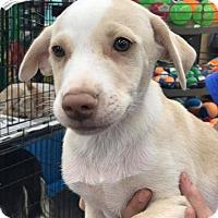 Adopt A Pet :: Rainer - Fresno, CA