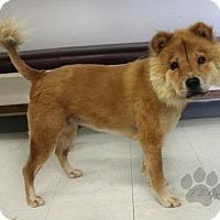 Adopt A Pet :: Tedi - Yukon, OK