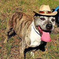 Adopt A Pet :: Maude - Simsbury, CT