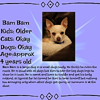 Adopt A Pet :: Bam Bam - Fredericksburg, VA