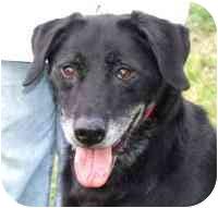 Labrador Retriever Mix Dog for adoption in Coleraine, Minnesota - Duke