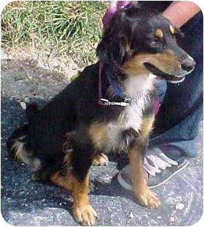 German Shepherd Dog Mix Dog for adoption in Brazil, Indiana - Ike