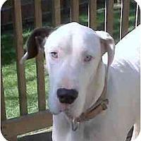 Adopt A Pet :: LUNA - Martinsburg, WV