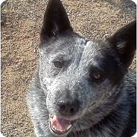 Adopt A Pet :: Pepper (Adoption Pending) - Phoenix, AZ