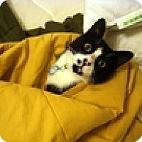 Adopt A Pet :: Colin - Vancouver, BC