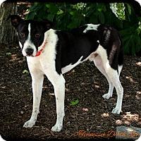 Adopt A Pet :: Cole - Mount Juliet, TN