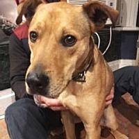 Adopt A Pet :: MEMPHIS - NYC, NY