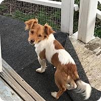 Adopt A Pet :: Cisco - Florence, KY - Dayton, OH