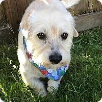 Adopt A Pet :: Bob Bon - Tumwater, WA