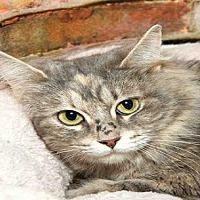 Adopt A Pet :: DARLA - Alameda, CA